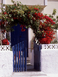 Bright Red Bougainvillea (Paper Flower) Trained in Arch Over Front of Cottage Santorini, Greece Photographic Print by Erika Craddock