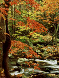 Fall Colour Along Middle Prong of Little River, USA Photographic Print by Willard Clay