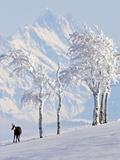 Chamois on Snowy Hillside with Mountain Background, Switzerland Fotografie-Druck von David Courtenay