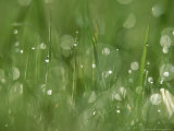 Water Droplets on Grass, Close-up Detail Yorkshire, UK Stampa fotografica di Mark Hamblin