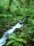 Hoh Rainforest, Olympic National Park Washington, USA Fotografie-Druck von Mark Hamblin