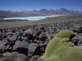 Bolivian Altiplano, Yareta, Andean Cushion Plant, Bolivia Photographic Print by Mark Jones