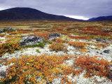 Dovrefjell National Park, Tundra in Autumn, Norway Fotografie-Druck von Mark Hamblin