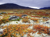 Dovrefjell National Park, Tundra in Autumn, Norway Stampa fotografica di Mark Hamblin