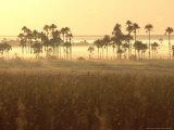 Cerrado Vegetation, Mauritia Vinifera, Emas National Park, Brazil Photographic Print by Mark Jones