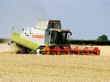 Combine Harvester, England Fotografisk tryk af Martin Page