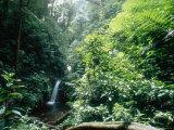Monteverde Cloud Forest, Costa Rica Fotografisk tryk af Mary Plage