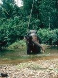 Asian Elephant, Bull in Stream, Sri Lanka Fotografisk tryk af Mary Plage