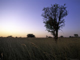 Trees at Sunset, South Africa Photographic Print by Ryan Ross
