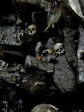Skulls Amongst Rocks, Indonesia Lámina fotográfica por Michael Brown