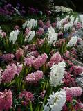 Butchart Gardens, Victoria, British Columbia, Canada Lámina fotográfica