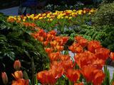 Sunken Garden, Butchart Gardens, Victoria, British Columbia, Canada Lámina fotográfica