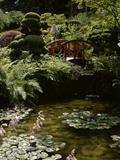Japanese Garden, Canada Lámina fotográfica