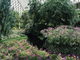 Longwood Gardens, Pennsylvania, USA Lámina fotográfica