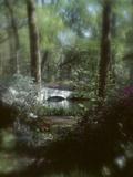 Plants in a Garden Lámina fotográfica
