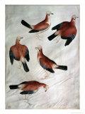 Five Jays Giclée-tryk af Antonio Pisani Pisanello