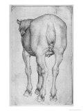 Horse Giclée-tryk af Antonio Pisani Pisanello