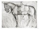 Mule Giclée-tryk af Antonio Pisani Pisanello