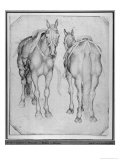Two Horses Giclée-tryk af Antonio Pisani Pisanello