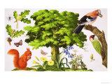 The Wonderful Oak Tree Giclee Print by John Rignall