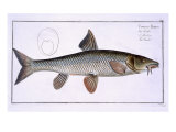 Barbel Giclee Print by Andreas-ludwig Kruger