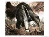 The Anteater Giclée-Druck