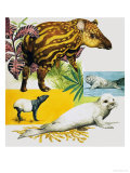 The Malayan Tapir and Atlantic Grey Seal Giclee Print by Eric Tansley