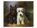Scottish and a Sealyham Terrier Gicléetryck av Lilian Cheviot