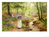 The Bluebell Glade Giclee Print by Ernest Walbourn