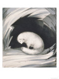 Arctic Fox, from Narrative of a Second Voyage in Search of a North-West Passage Giclee Print by Sir John Ross