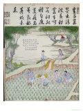 Transplanting, the Rice Culture in China Gicléedruk