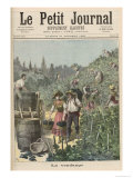 The Wine Harvest, from Le Petit Journal, 31st October 1891 Giclee Print by Henri Meyer