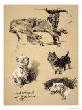Irish Wolfhound, West Highlander and Cairn, 1930, Just Among Friends, Aldin Giclée-Druck von Cecil Aldin