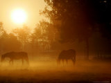 Horses Graze in a Meadow in Early Morning Fog in Langenhagen Near Hanover, Germany, Oct 17, 2006 Photographic Print by Kai-uwe Knoth