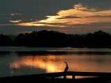 A Cormorant is Silhouetted Against the Waters of Lake Talquin Reproduction photographique