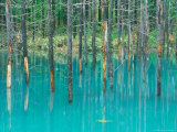 Shirogane Hot Springs, Blue Marsh, Hokkaido, Japan Fotografisk trykk av Rob Tilley