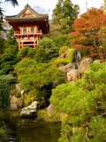 Japanese Tea Garden, Golden Gate Park, San Francisco, California, USA Fotografie-Druck von Michele Westmorland