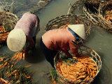 Women Washing Carrots in River Water Da Lat, Lam Dong, Vietnam Reproduction photographique par Glenn Beanland