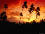 Palm Trees at Sunset, Fiji Fotografie-Druck von Casey Mahaney