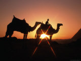 Camels and Pyramids in Background, Cairo, Egypt Fotografie-Druck von Casey Mahaney