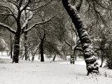 Queens Park Manchester in the Winter Lámina fotográfica