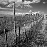 Dirt Road Leading to House, Tuscany, Italy Fotografisk trykk av Ellen Kamp