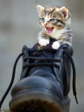 A Kitten in a Boot Photographic Print