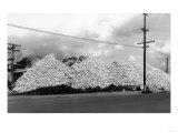 A Mountain of Oyster Shells View - South Bend, WA Giclée-Premiumdruck von  Lantern Press