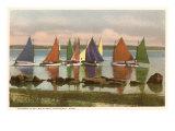 Rainbow Fleet, Nantucket, Massachusetts Posters
