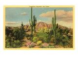 Camelback Mountain, Saguaros, Arizona Kunstdrucke