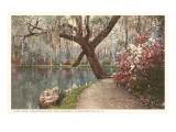 Magnolia on the Ashley, Charleston, South Carolina Posters