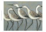 Shore Birds I Posters by Norman Wyatt Jr.