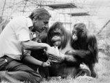 David Attenborough with Orang-Utang and Her Baby at London Zoo, April 1982 Fotografie-Druck