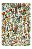 Fleurs Affiches